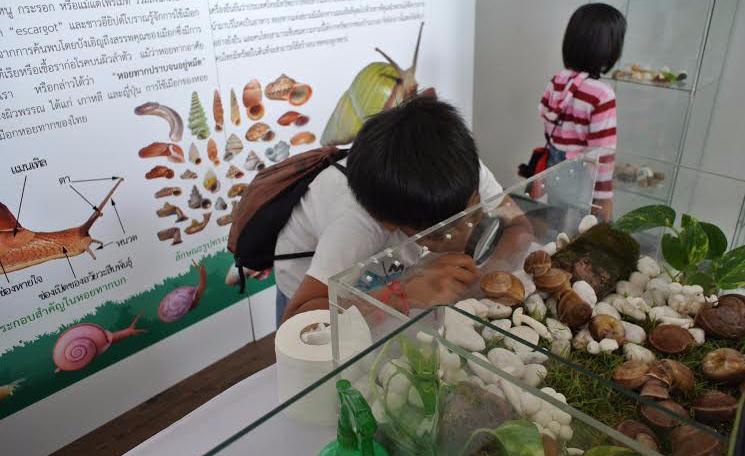 จุฬาฯ เปิดตัวฟาร์มหอยทากเชิงนิเวศแห่งแรกของเอเชีย | สยามสเนล